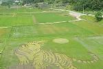 Hàn Quốc: Mãnh hổ khổng lồ xuất hiện trên ruộng lúa