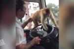 Clip: Khỉ 'giả nai' cướp đồ trong ôtô