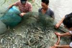 Vì sao ngân hàng nhà nước chưa ưu tiên doanh nghiệp nuôi tôm, cá tra?