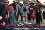 Hà Tĩnh triển khai thu mua hải sản an toàn cho ngư dân