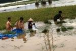 Công an lội ruộng gặt lúa giúp dân 'chạy' lũ