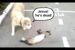 Clip: Mèo giả chết đánh lừa chó