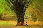 Cây tre Việt Nam