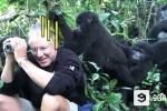 Chạm trán khỉ đột núi, nhiếp ảnh gia 'hóa tượng'