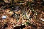 Phát hiện bộ xương người trong rừng keo