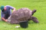'Cụ rùa' già nhất thế giới được tắm lần đầu tiên sau 184 năm