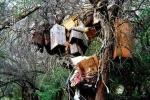 Kinh dị hủ tục táng người chết… trên cây