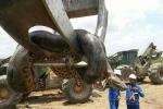 Phát hiện loài trăn khổng lồ nặng gần nửa tấn ở Brazil