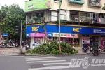 Lộ diện kẻ chặt cây xanh ở Hà Nội trong đêm
