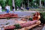 Nhánh cây lớn gãy trên đầu, nhiều người bỏ chạy thục mạng