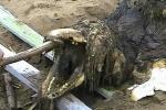 Bộ xương quái vật kỳ dị trôi dạt đến bờ biển Nga