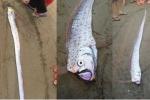 Cá lạ dài 2 mét chết dạt vào bờ biển Hà Tĩnh