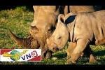 Gian nan bảo vệ động vật hoang dã quý hiếm
