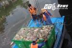 Cận cảnh gần 100 công nhân  môi trường trục vớt cá chết trên kênh Nhiêu Lộc