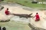 Video: Rụng tim với những pha động vật 'nổi khùng' tấn công con người
