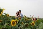 Choáng ngợp cánh đồng hoa hướng dương miền tây xứ Nghệ