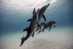 Những tác phẩm nhiếp ảnh dưới nước đẹp tuyệt vời