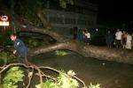 TPHCM: Giông quật ngã cây xanh, nhiều người gặp nạn