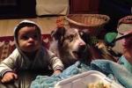 Chú chó nói 'mama' để tranh ăn với em bé