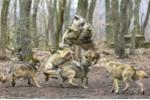 Ảnh đẹp: Bầy sói hoang tung mình xâu xé miếng mồi