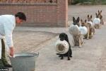 Ấn tượng cảnh đàn chó ngậm bát, xếp hàng chờ chia đổ ăn