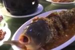 Kinh ngạc cá đã nấu chín trên đĩa sống lại sau khi uống rượu