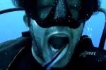 Clip: Tròn mắt xem cá dọn bể 'vệ sinh răng miệng' cho thợ lặn dưới đại dương