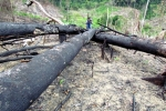 Ảnh: Cận cảnh vụ đốt rừng rúng động Khánh Hoà
