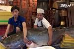 TP.HCM: Hai con cá giá gần nửa tỷ đồng