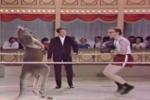 Clip: Không thể nhịn cười với màn đấm bốc cùng Kangaroo