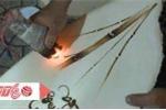Hồi sinh tranh bút lửa Đà Lạt