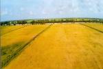 Vineco hợp tác với Trung An ra mắt sản phẩm gạo sạch