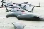 Clip: Hàng trăm con cá rơi từ trên trời xuống Sri Lanka