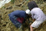 Sập hầm vàng, 6 phu vàng chết vùi trong đất