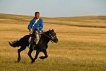 Ngựa Mông Cổ có gì đặc biệt?