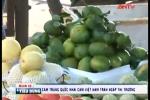 Cam Trung Quốc 'đội lốt' cam Hà Giang tấn công thị trường
