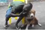 Ép chó chụp ảnh cùng, bị cắn vào mặt