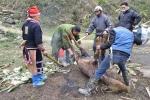Thịt trâu chết rét la liệt ở Sa Pa