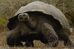 Đi tìm rùa khổng lồ nuốt người đàn bà xinh đẹp ở Bắc Giang