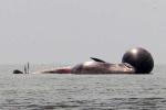 Lại phát hiện thêm cá voi 'khủng' dạt vào bờ biển Nghệ An