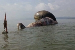 Xác cá voi hàng chục tấn dạt vào bờ biển Nghệ An