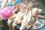 Đột biến gen vì ăn gà nhập lậu