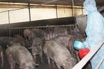 Tin giật mình với người hay dùng thịt bò Úc, gà Mỹ