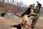 Video: Lính Triều Tiên huấn luyện chó cắn quan chức Hàn
