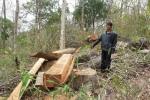 Cán bộ bảo vệ rừng bị lâm tặc dùng nỏ bắn vào mắt