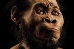 Phát hiện hóa thạch tổ tiên mới của loài người ở Nam Phi