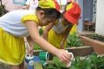 Giáo dục mầm non bảo vệ môi trường