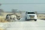 Clip: Tê giác nổi điên húc tung xe Jeep
