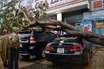 Hai 'xế hộp' bị cây đổ đè bẹp trong mưa lớn