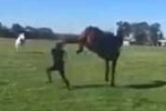 Chửi thề, một phụ nữ bị ngựa hất văng, tung cú đá hậu vào mặt như trời giáng